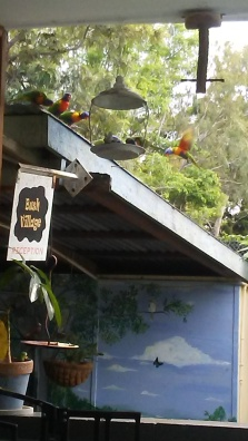 Lorikeets at holiday site